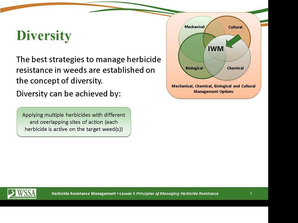Burndown Program for Glyphosate-Resistant Horseweed Two components of burndown program: 1.