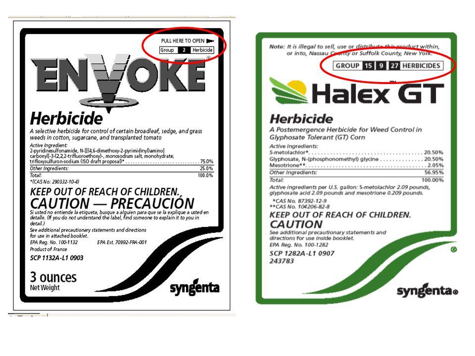 0X 1/4X 1/2X 1X 2X 4X 8X 16X 32X Hoelon-susceptible biotype Hoelon-resistant biotype, Union Co.; Treated with Hoelon Group 1, ACCase inhibitor Hoelon-resistant biotype, Union Co.; Treated with Axial Group 1, ACCase inhibitor Example of Cross Resistance Italian ryegrass