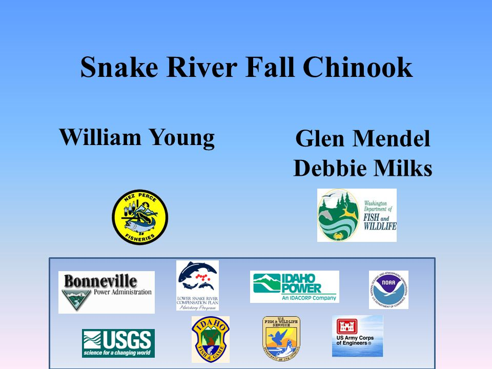 Snake River Fall Chinook Glen Mendel Debbie Milks William Young