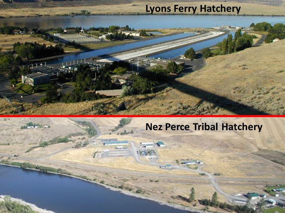 Nez Perce Tribal Hatchery Lyons Ferry Hatchery