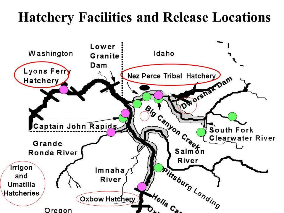 Hatchery Facilities and Release Locations Nez Perce Tribal Hatchery Oxbow Hatchery Irrigon and Umatilla Hatcheries