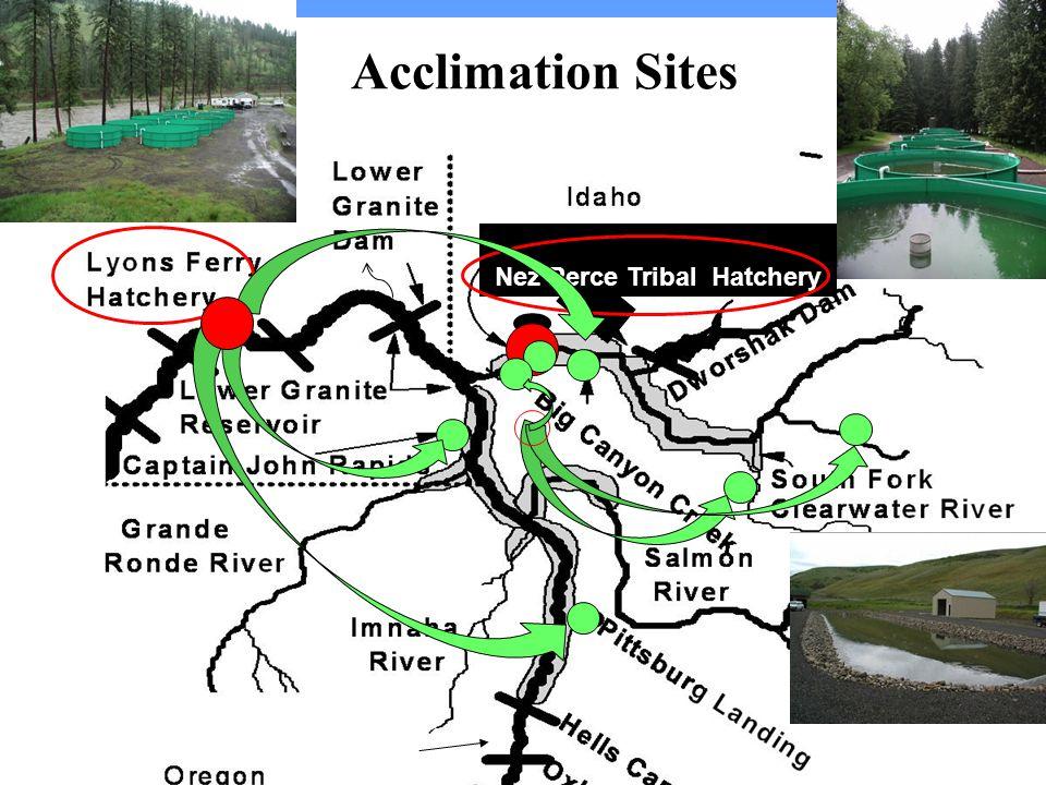 Acclimation Sites Nez Perce Tribal Hatchery Oxbow Hatchery Irrigon and Umatilla Hatcheries