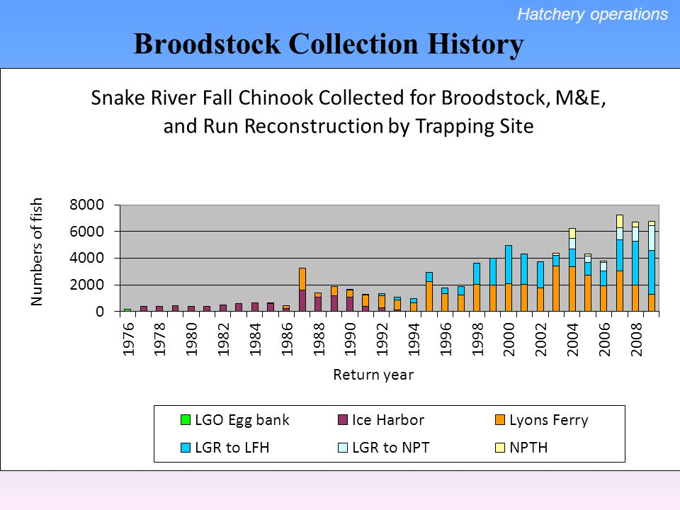 Broodstock Collection History Hatchery operations