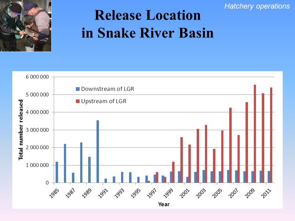 Release Location in Snake River Basin Hatchery operations