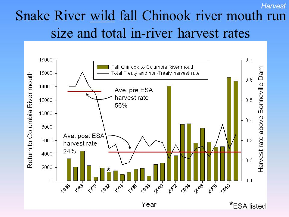 Snake River wild fall Chinook river mouth run size and total in-river harvest rates Ave. pre ESA harvest rate 56% Ave. post ESA harvest rate 24% * * E