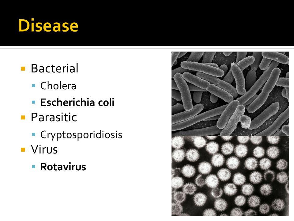 Bacterial Cholera Escherichia coli Parasitic Cryptosporidiosis Virus Rotavirus