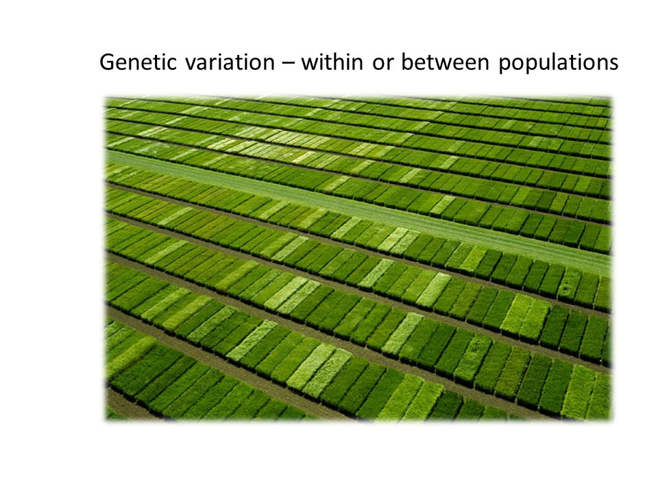 Genetic variation – within or between populations
