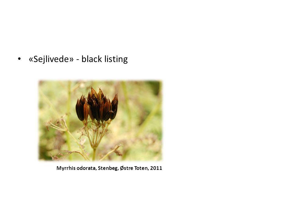 «Sejlivede» - black listing Myrrhis odorata, Stenbeg, Østre Toten, 2011