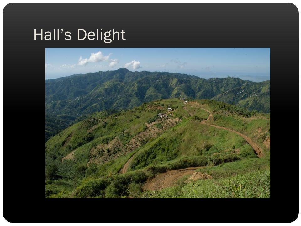 Halls Delight