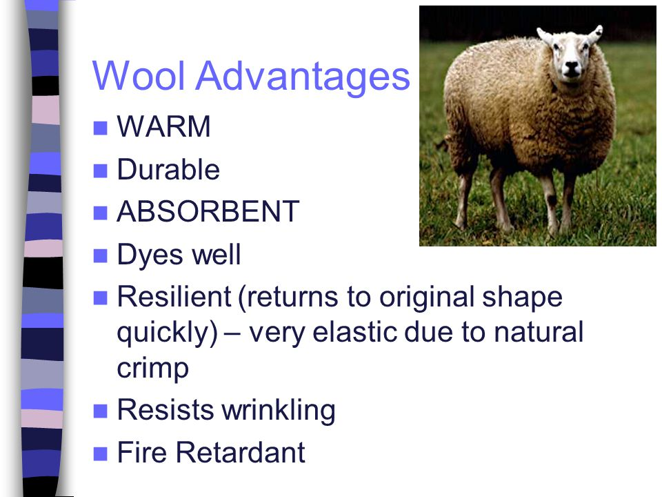 Wool Advantages WARM Durable ABSORBENT Dyes well Resilient (returns to original shape quickly) – very elastic due to natural crimp Resists wrinkling F