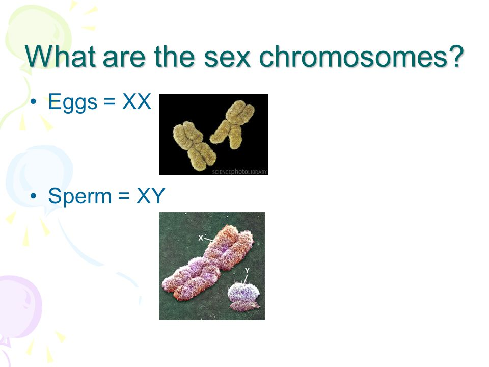 What are the sex chromosomes? Eggs = XX Sperm = XY
