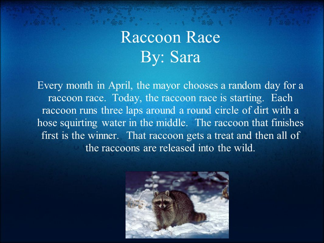 Raccoon Race By: Sara Every month in April, the mayor chooses a random day for a raccoon race.