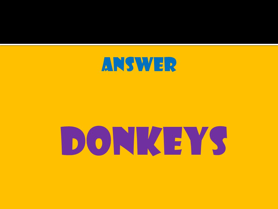 answer donkeys