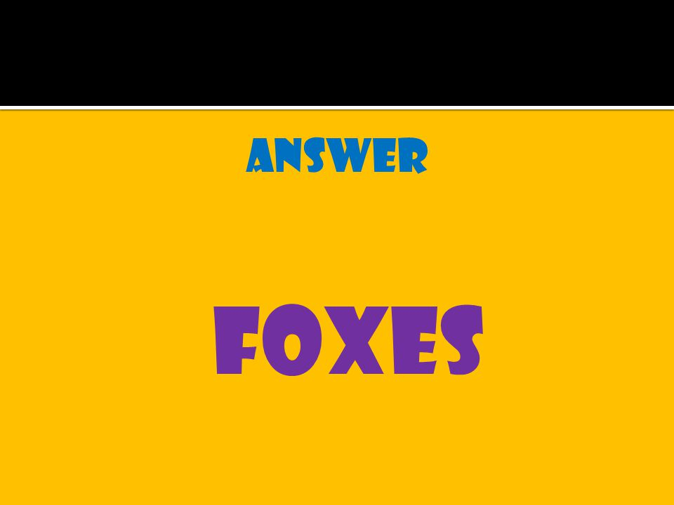 answer foxes