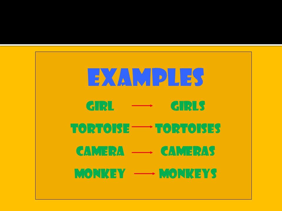 Examples girlgirls tortoisetortoises cameracameras monkeymonkeys