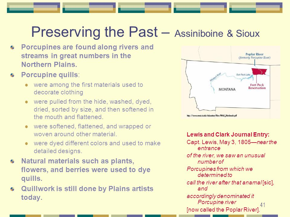 41 Preserving the Past – Assiniboine & Sioux Porcupines are found along rivers and streams in great numbers in the Northern Plains. Porcupine quills: