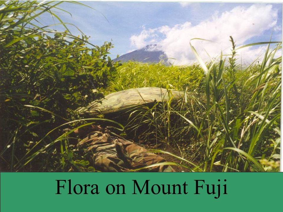 Flora on Mount Fuji