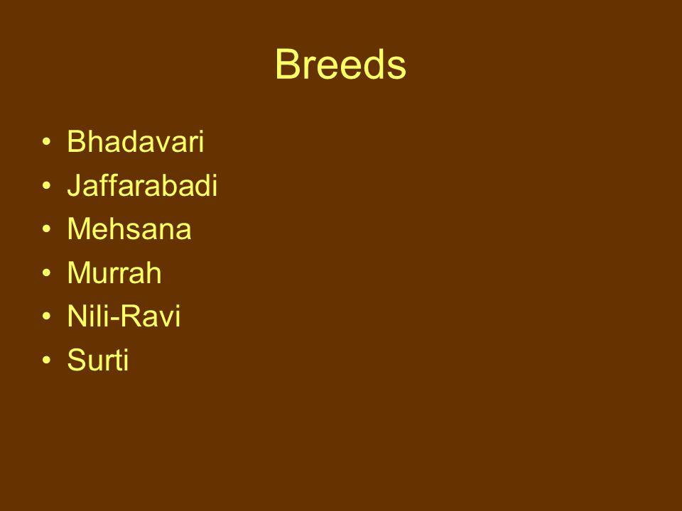 Breeds Bhadavari Jaffarabadi Mehsana Murrah Nili-Ravi Surti