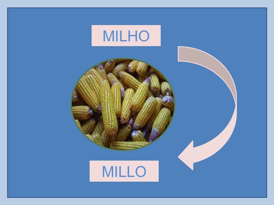 MILHO MILLO