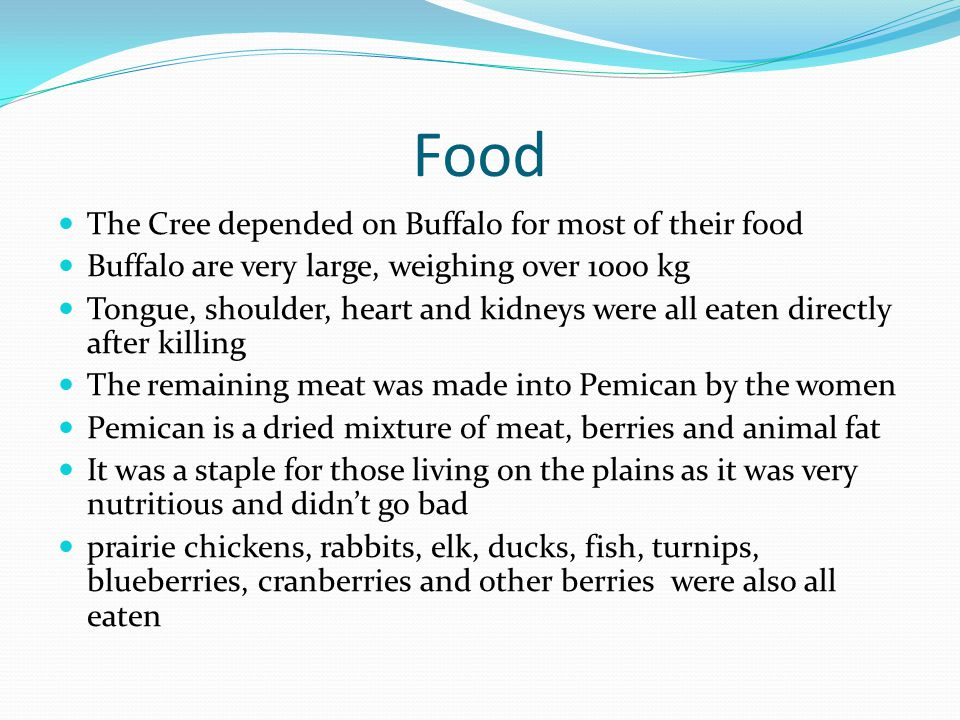 Food The Cree depended on Buffalo for most of their food Buffalo are very large, weighing over 1000 kg Tongue, shoulder, heart and kidneys were all eaten directly after killing The remaining meat was made into Pemican by the women Pemican is a dried mixture of meat, berries and animal fat It was a staple for those living on the plains as it was very nutritious and didnt go bad prairie chickens, rabbits, elk, ducks, fish, turnips, blueberries, cranberries and other berries were also all eaten