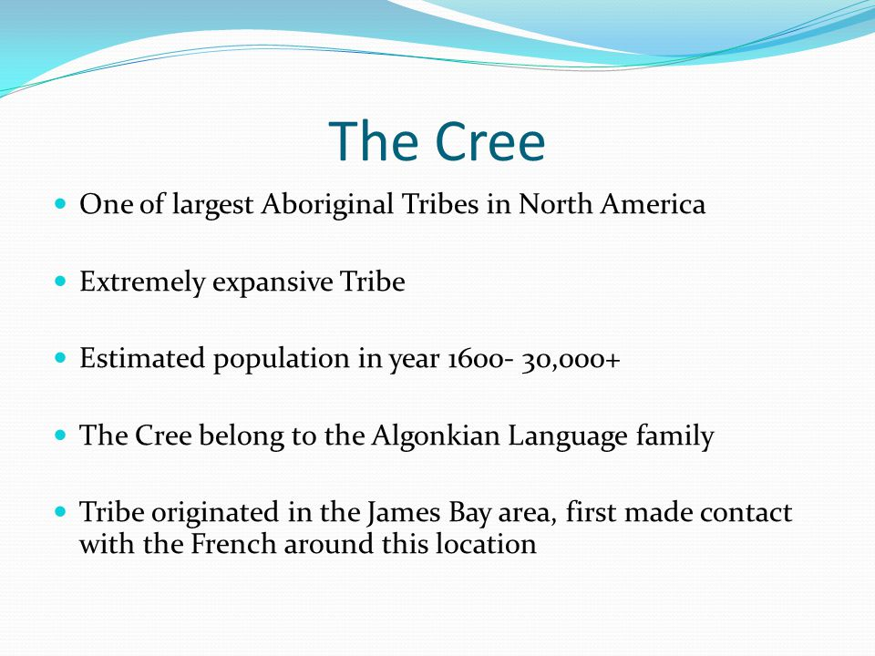 The Cree One of largest Aboriginal Tribes in North America Extremely expansive Tribe Estimated population in year 1600- 30,000+ The Cree belong to the Algonkian Language family Tribe originated in the James Bay area, first made contact with the French around this location