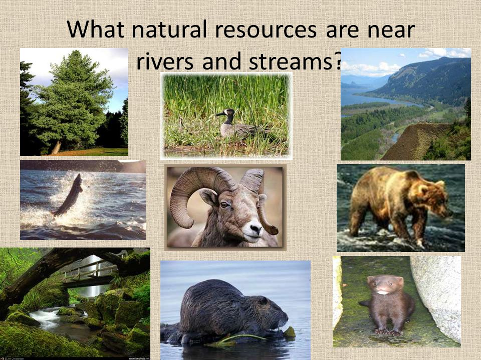 What natural resources are near rivers and streams?