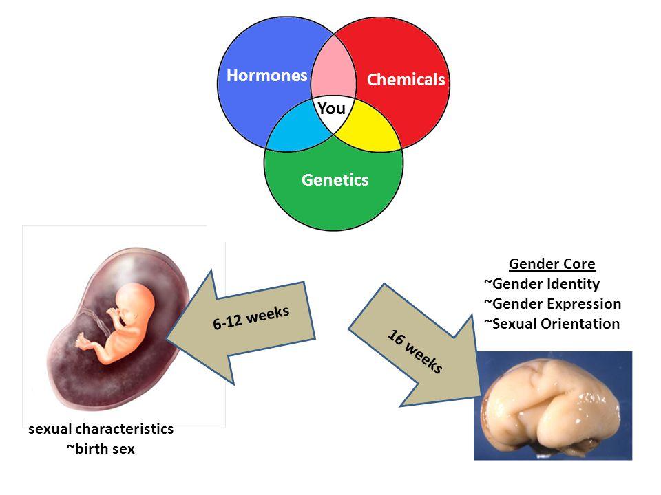 6-12 weeks 16 weeks sexual characteristics ~birth sex Gender Core ~Gender Identity ~Gender Expression ~Sexual Orientation Chemicals Hormones Genetics