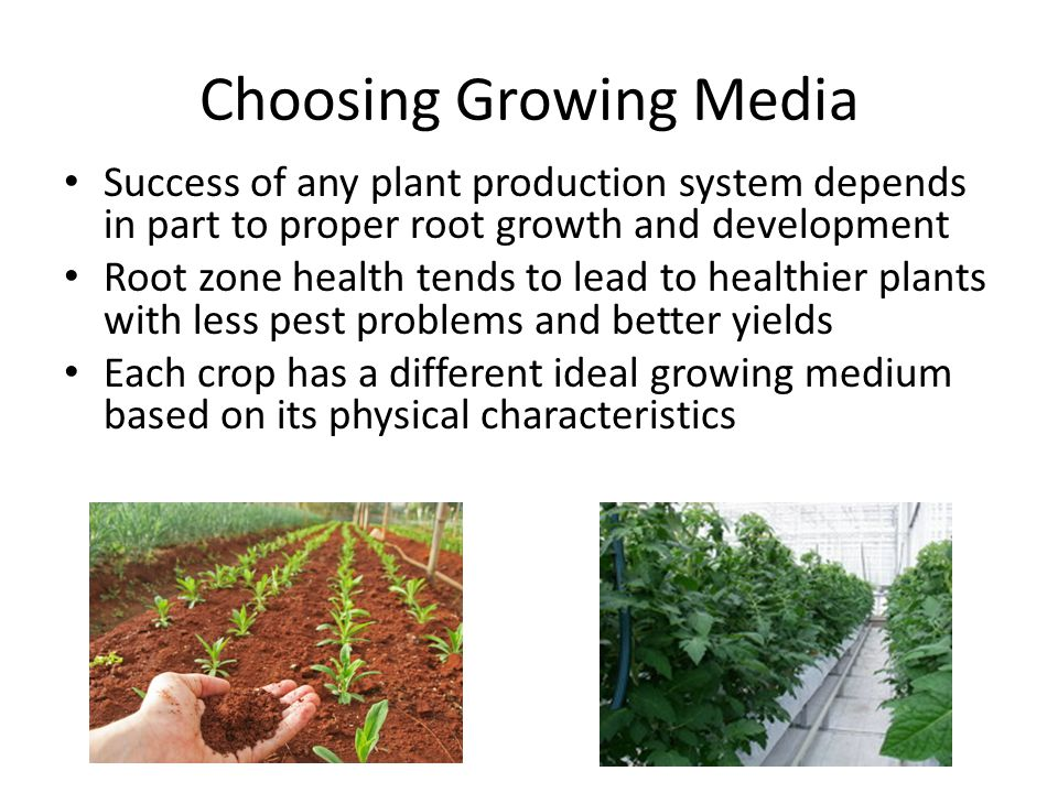 Trials at University of AZ & WUR of Netherlands Crops – Tomato & Cucumber Duration – 2 Years Conclusions – Reduction in Blossom End Rot – Faster Production of Fruit – Yielded 4% more Fruit – Reduction in Pythium 15 to 1 * In comparison to Rockwool Media