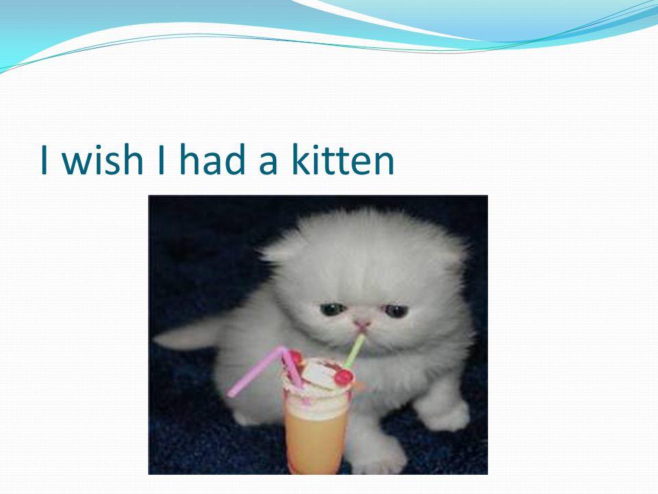 I wish I had a kitten