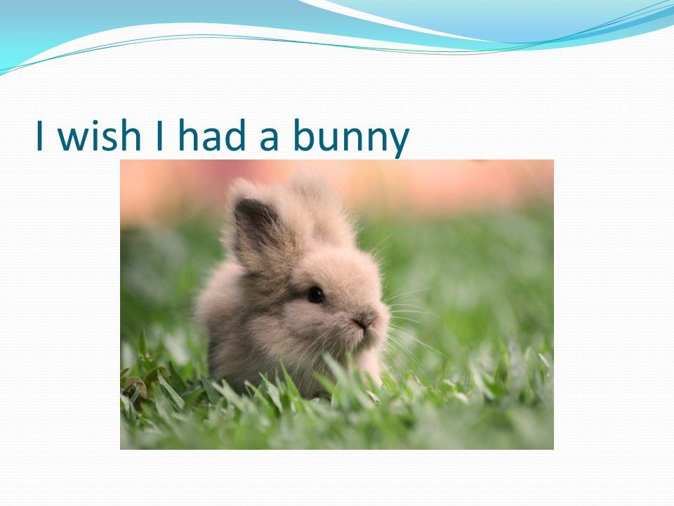 I wish I had a bunny