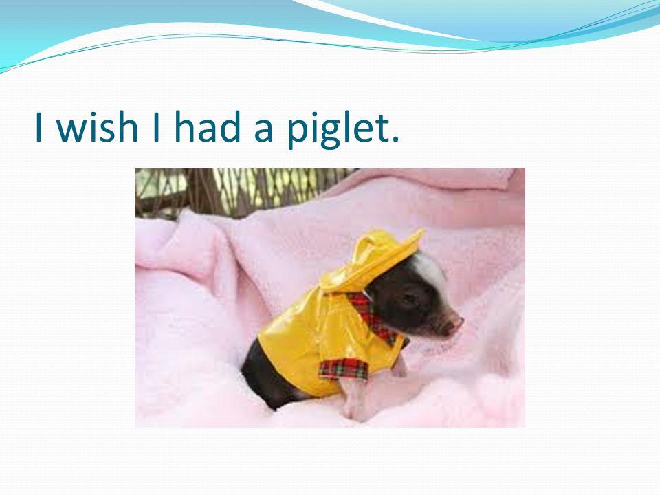 I wish I had a piglet.