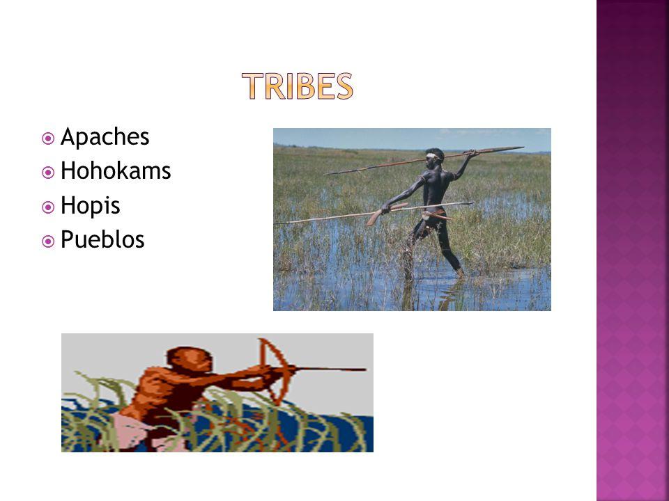 Apaches Hohokams Hopis Pueblos