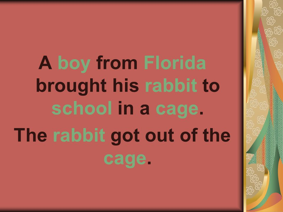 A boy from Florida brought his rabbit to school in a cage. The rabbit got out of the cage.