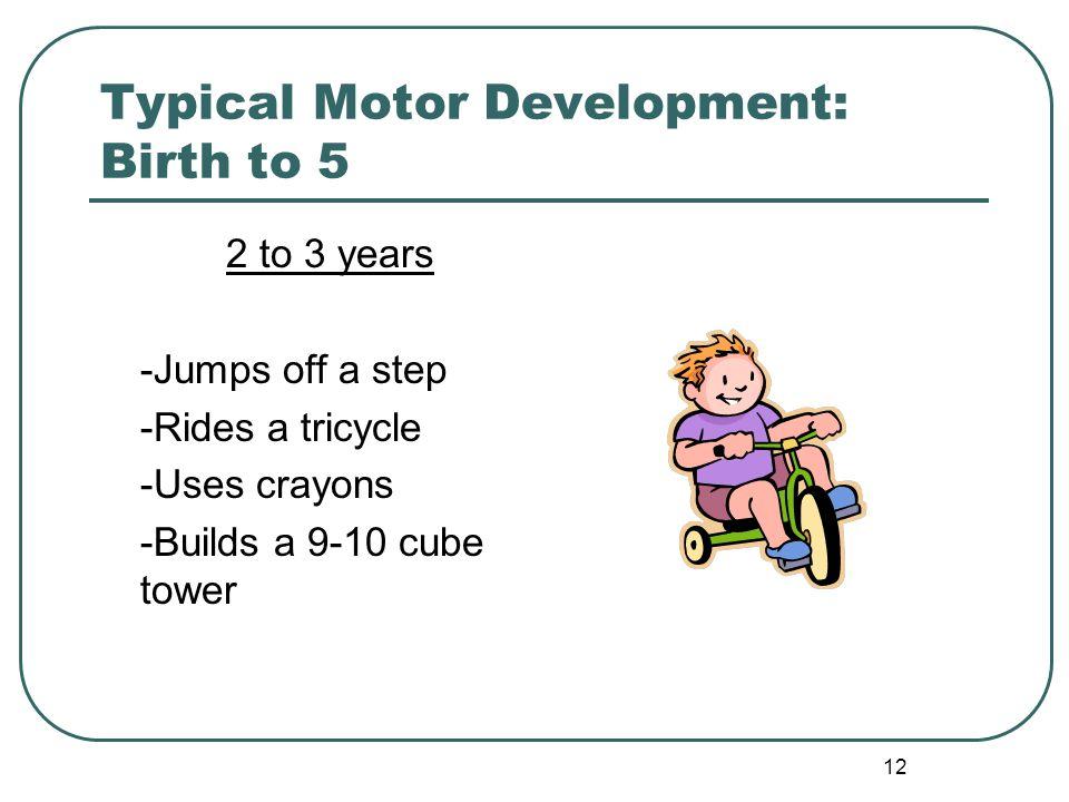 12 Typical Motor Development: Birth to 5 2 to 3 years -Jumps off a step -Rides a tricycle -Uses crayons -Builds a 9-10 cube tower