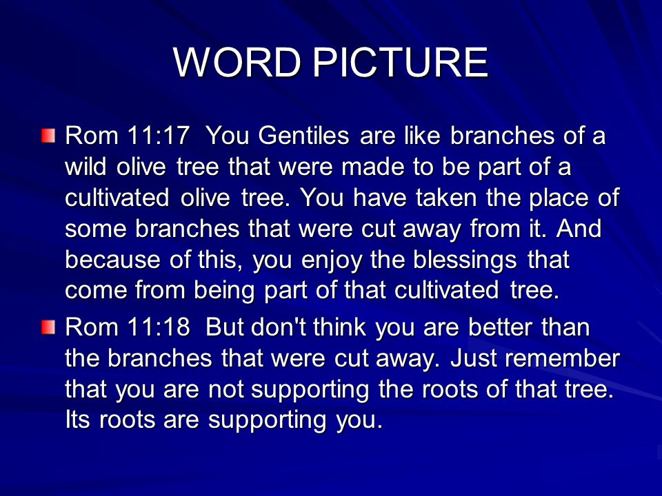 WORD PICTURE Rom 11:17 You Gentiles are like branches of a wild olive tree that were made to be part of a cultivated olive tree.