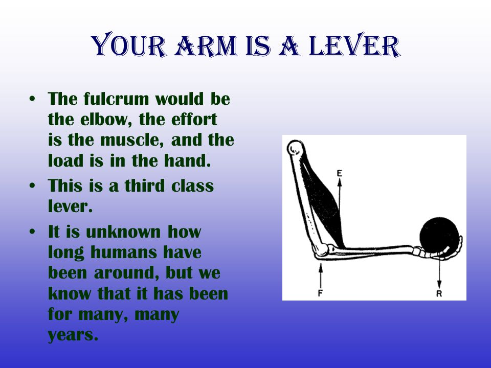 Your Arm is a lever The fulcrum would be the elbow, the effort is the muscle, and the load is in the hand. This is a third class lever. It is unknown