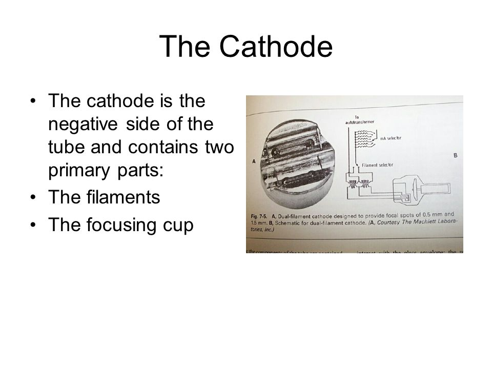 The Cathode The cathode is the negative side of the tube and contains two primary parts: The filaments The focusing cup