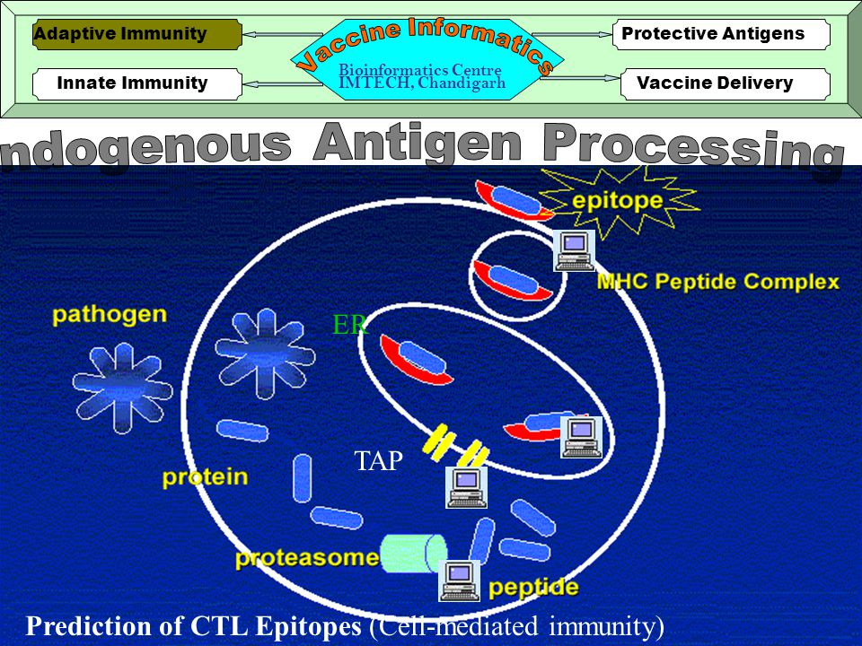 4 Prediction of CTL Epitopes (Cell-mediated immunity) ER TAP Innate ImmunityVaccine Delivery Protective AntigensAdaptive Immunity Bioinformatics Centre IMTECH, Chandigarh