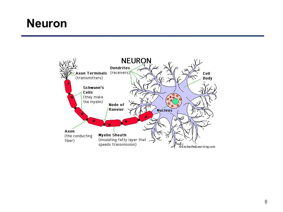 8 Neuron