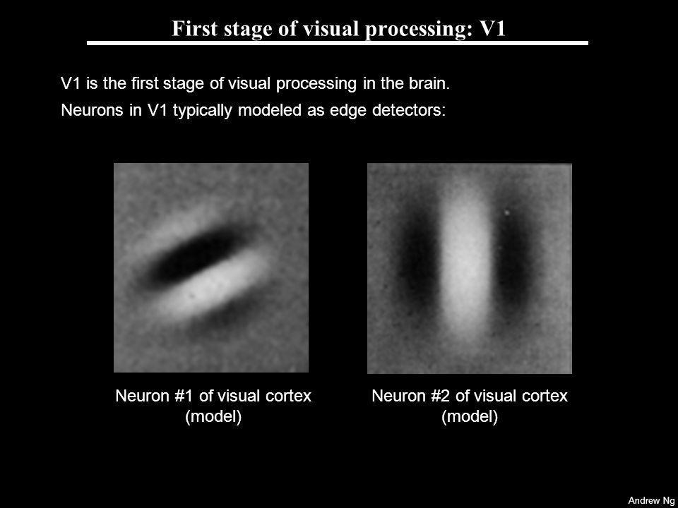 Andrew Ng First stage of visual processing: V1 V1 is the first stage of visual processing in the brain. Neurons in V1 typically modeled as edge detect