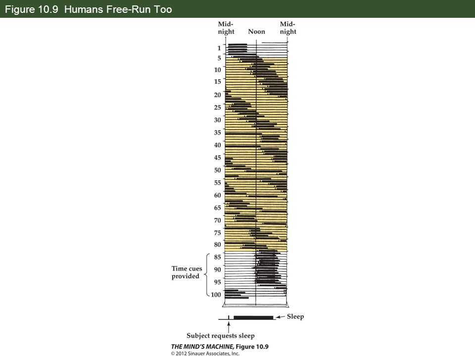 Figure 10.9 Humans Free-Run Too
