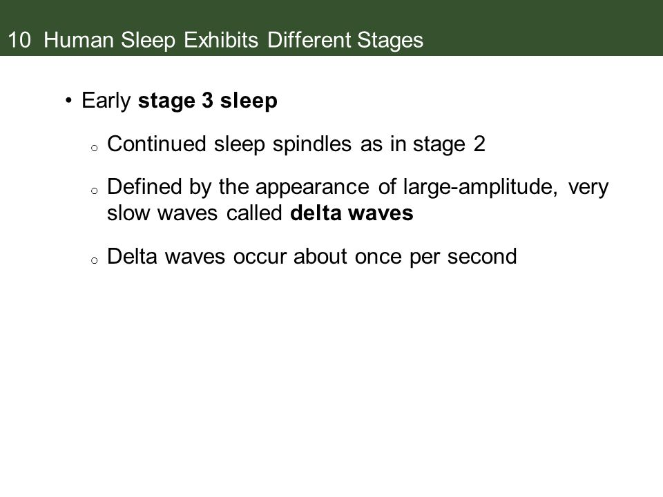 10 Human Sleep Exhibits Different Stages Early stage 3 sleep o Continued sleep spindles as in stage 2 o Defined by the appearance of large-amplitude, very slow waves called delta waves o Delta waves occur about once per second