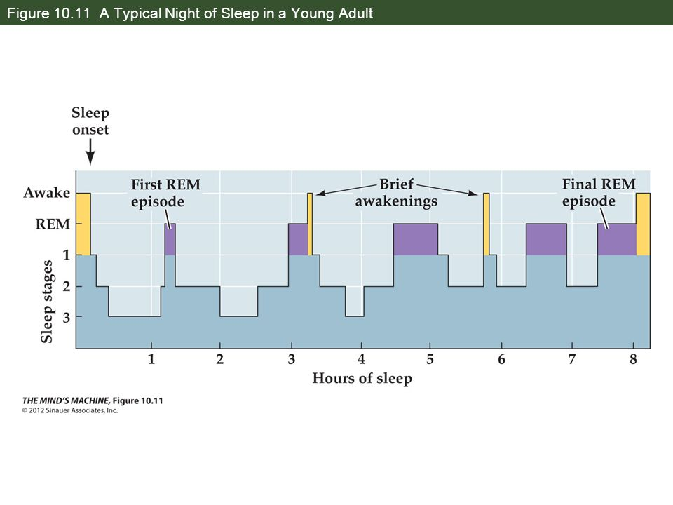 Figure 10.11 A Typical Night of Sleep in a Young Adult