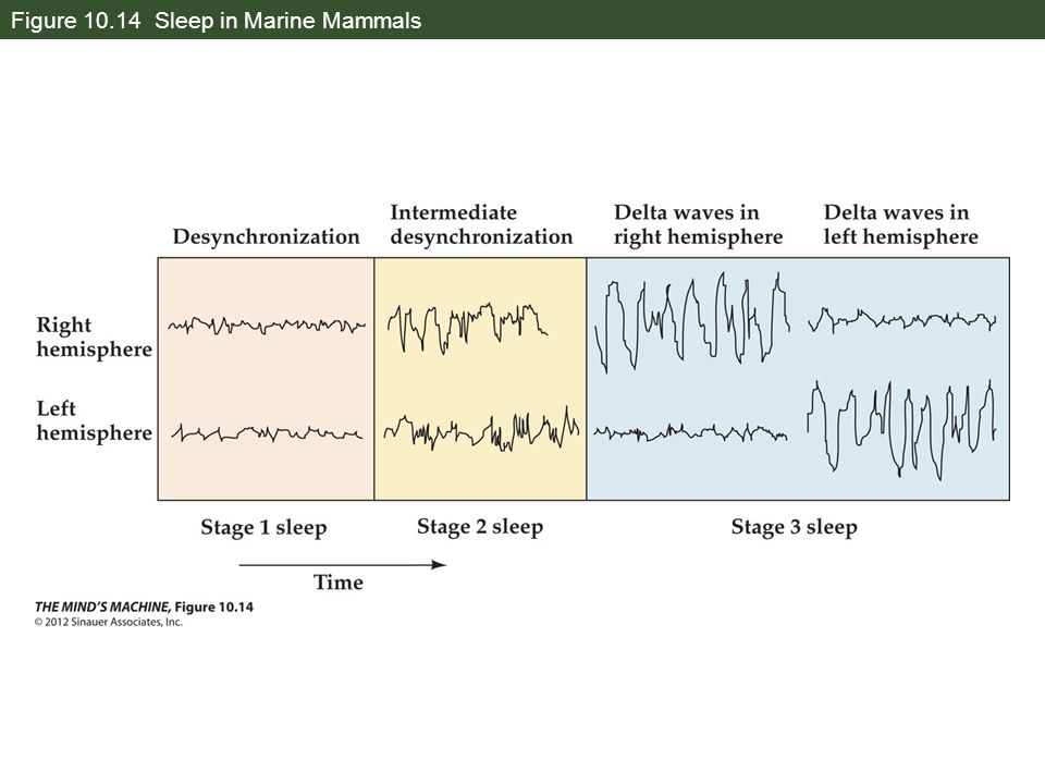 Figure 10.14 Sleep in Marine Mammals