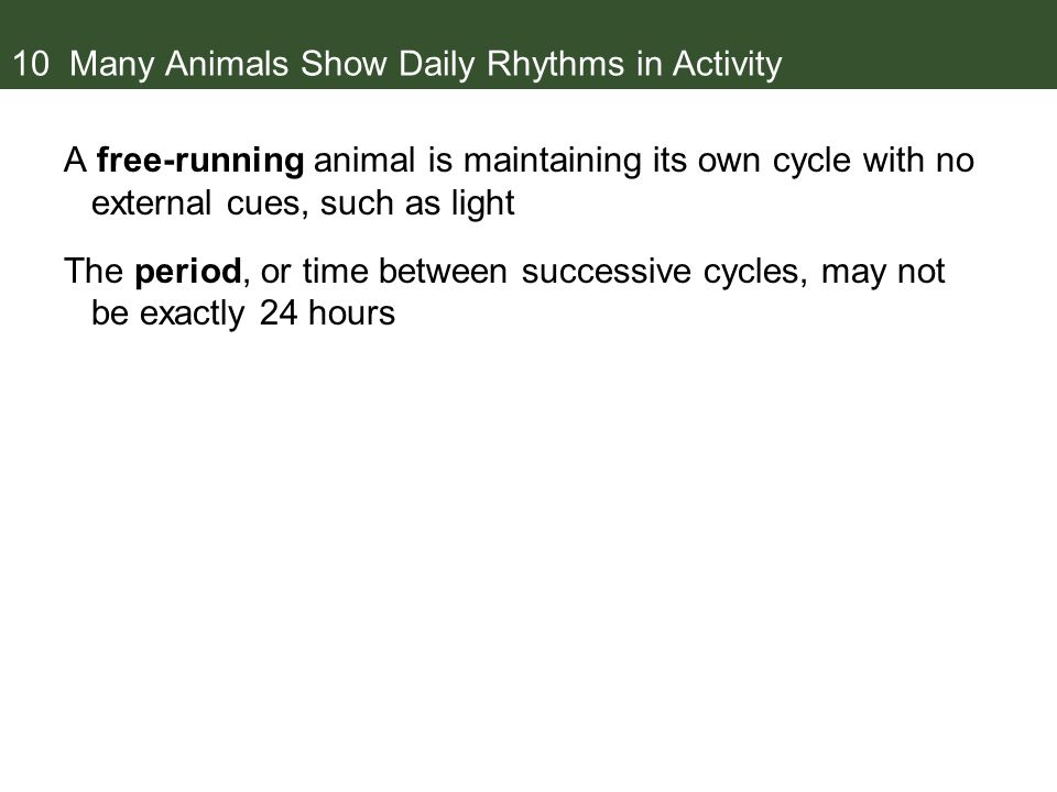10 Many Animals Show Daily Rhythms in Activity A free-running animal is maintaining its own cycle with no external cues, such as light The period, or time between successive cycles, may not be exactly 24 hours