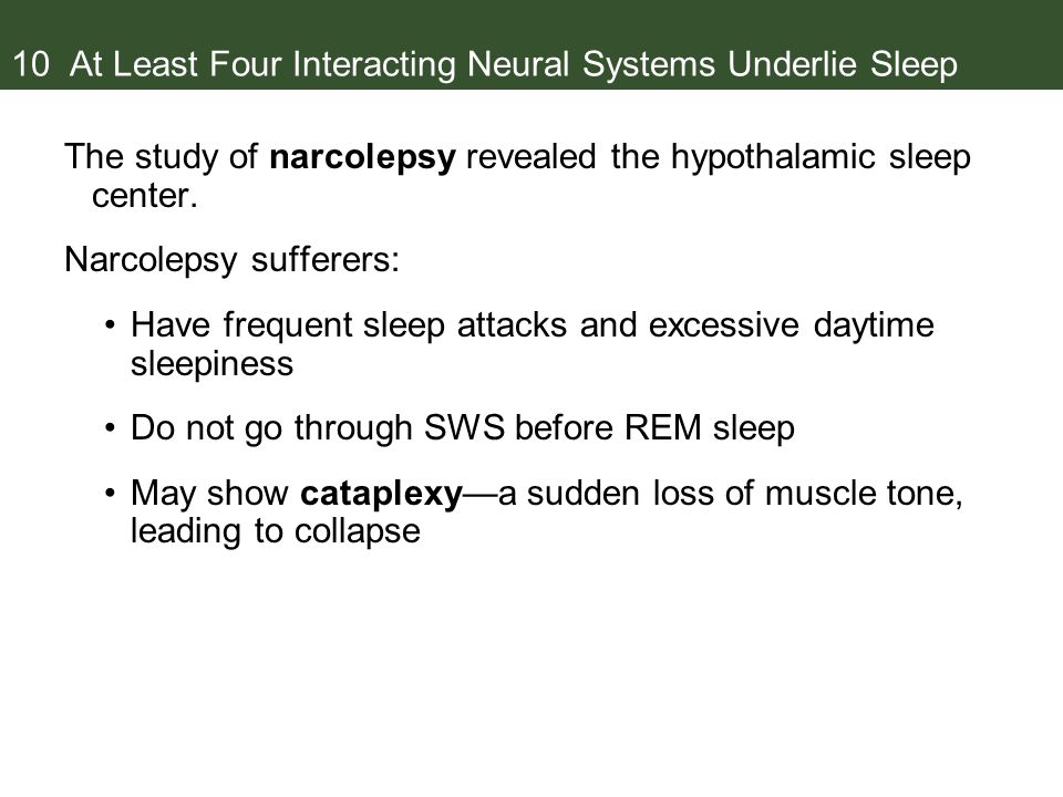 10 At Least Four Interacting Neural Systems Underlie Sleep The study of narcolepsy revealed the hypothalamic sleep center.
