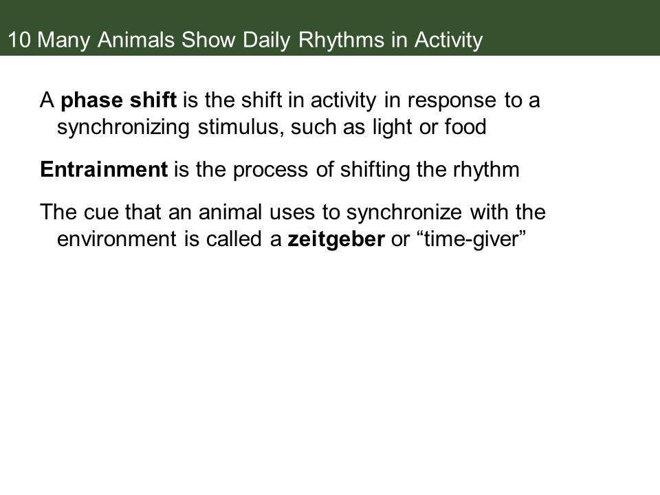 10 Many Animals Show Daily Rhythms in Activity A phase shift is the shift in activity in response to a synchronizing stimulus, such as light or food Entrainment is the process of shifting the rhythm The cue that an animal uses to synchronize with the environment is called a zeitgeber or time-giver