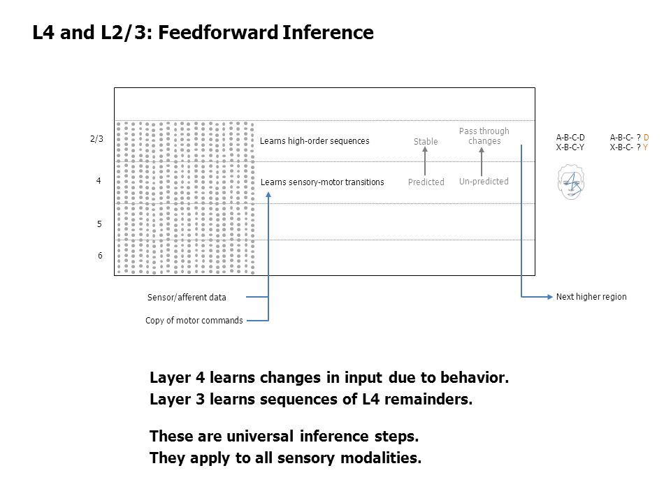 2/3 4 5 6 L4 and L2/3: Feedforward Inference Copy of motor commands Sensor/afferent data Learns sensory-motor transitions Learns high-order sequences