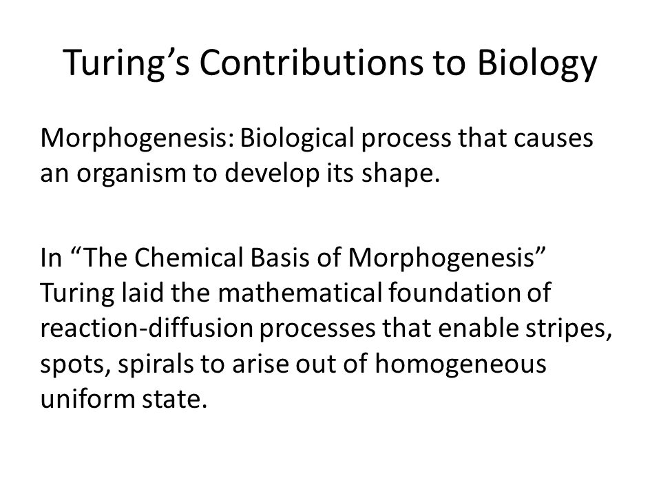 Turings Contributions to Biology Morphogenesis: Biological process that causes an organism to develop its shape.
