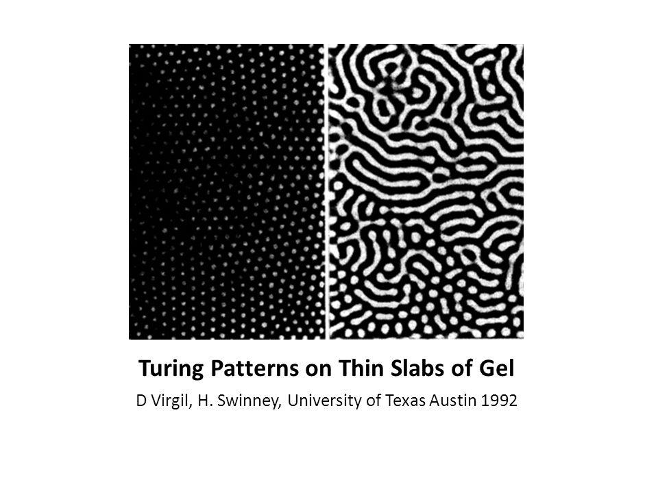 Turing Patterns on Thin Slabs of Gel D Virgil, H. Swinney, University of Texas Austin 1992